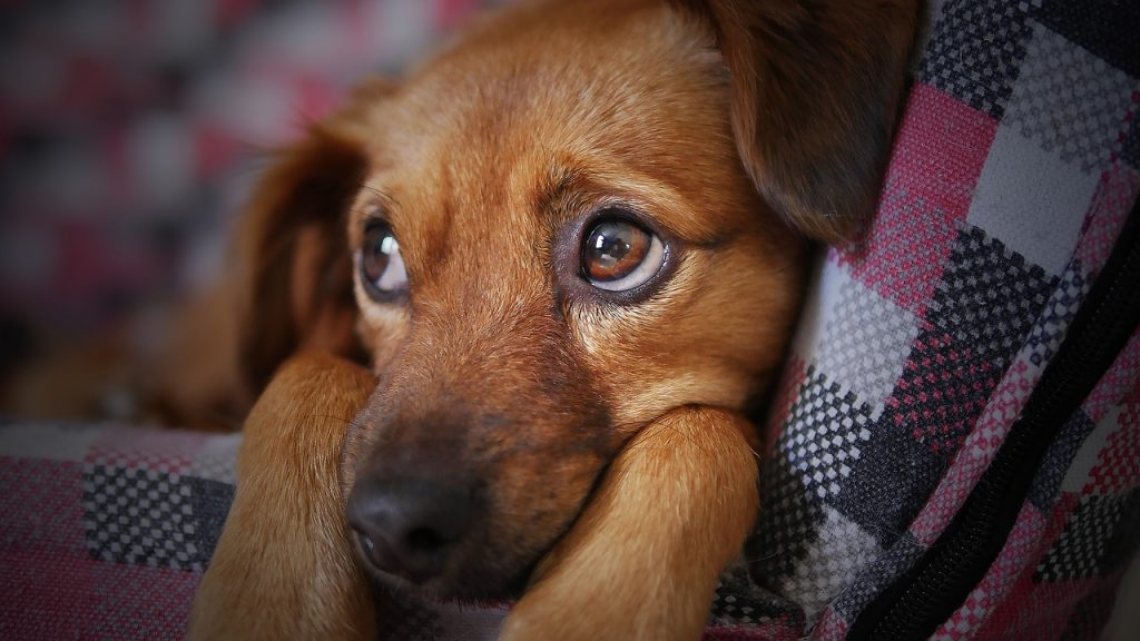 Making a Will - what happens to your dog